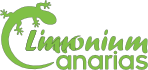 limonium-logotipo